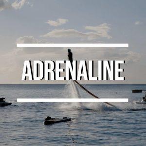 Observation des dauphins à fort de france