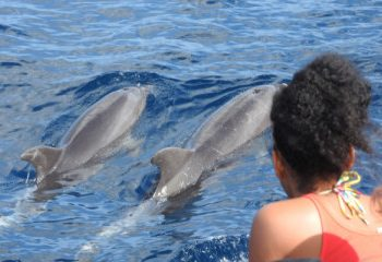 travel with dolphins - Martinique activities