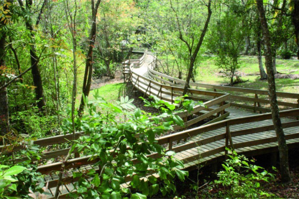 chemin aménagé sur les arbres - Atawane Martinique