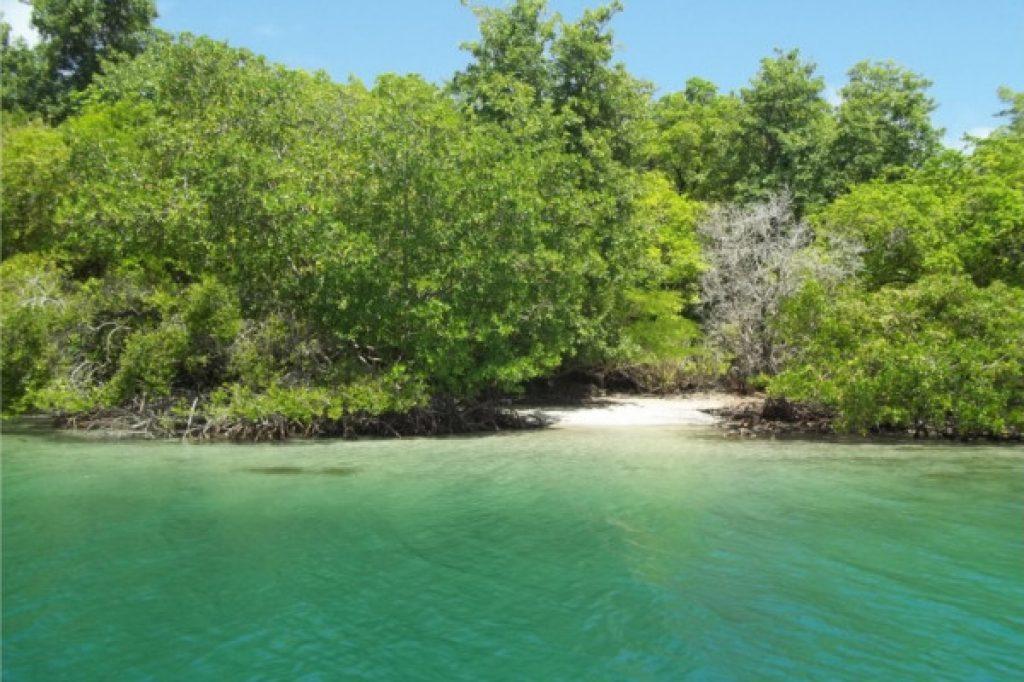 petite plage - activités Atawane Martinique