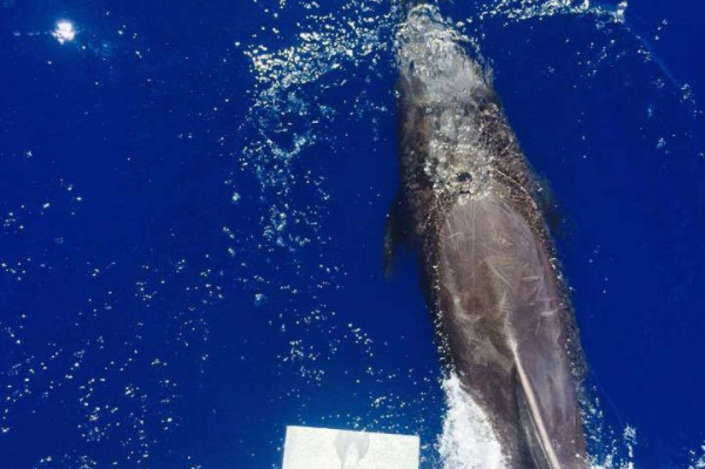 dolphins - Atawane Martinique activity