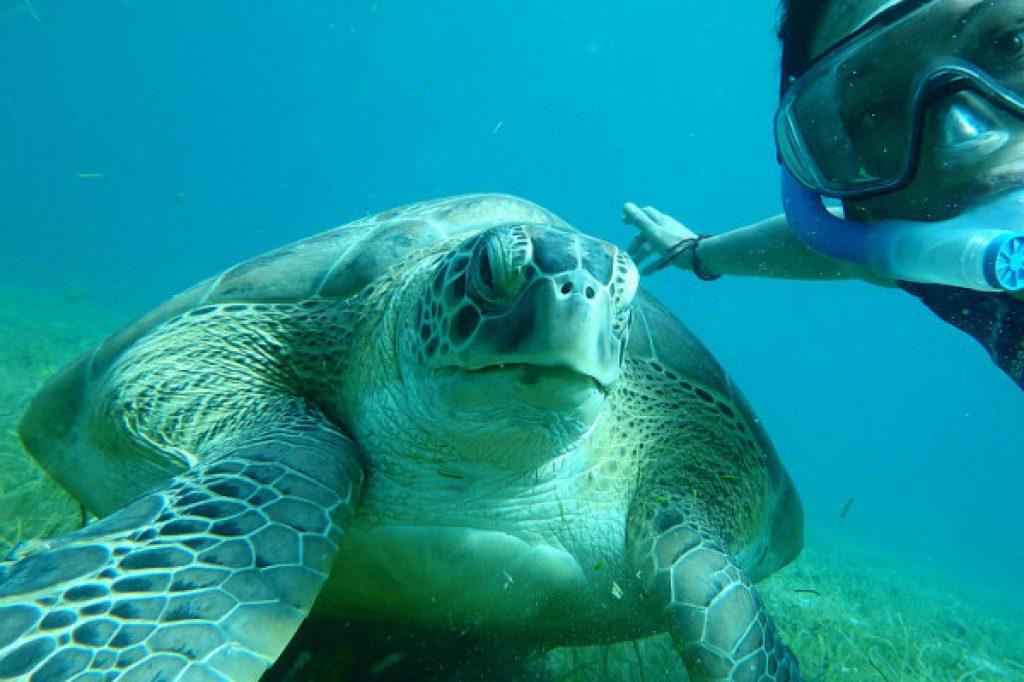 tortue - activité Martinique
