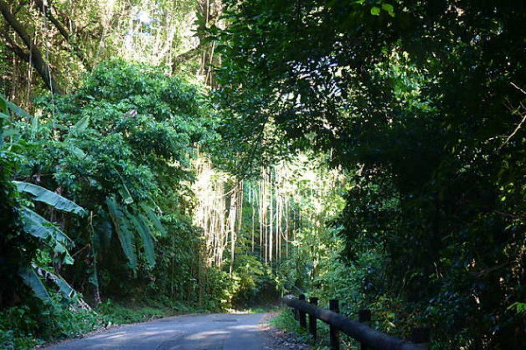 route en pleine foret dans le nord de la Martinique