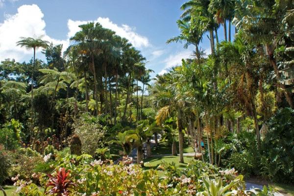Tour à Saint-Pierre et Jardin de Balata