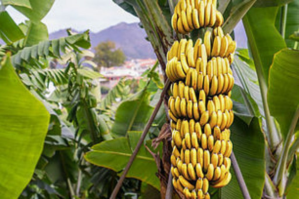 banana tour - Martinique bus tour